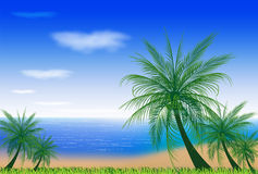 BEACH WITH COCONUT TREES Stock Photos