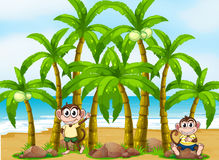 A beach with coconut trees and monkeys Royalty Free Stock Photography