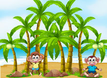A beach with coconut trees and playful monkeys Royalty Free Stock Images
