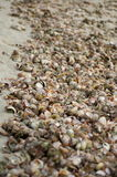Colorful Sea Shells Stock Images