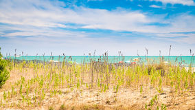 Beach with colorful umbrellas, wooden fences and wildlife. Stock Photography
