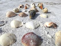 Beach Combers Find Seashells stock photography