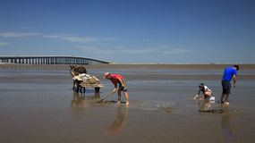 Beach combing. People were digging and collecting clams for fun. for sunshine and as well as for food, after the tide went out, Jinzhou, northeast China Stock Photo
