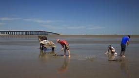 Beach combing Stock Photo