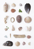 Beach combing Collection. Selection of sea shells on a white background Royalty Free Stock Photo