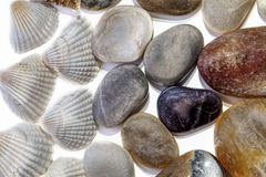Beach combing find of pebbles and shells forming a background la Stock Photography