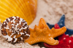 Beach compositions. Shells on sand Royalty Free Stock Photos