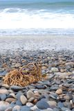 Beach concept, stones and coral Royalty Free Stock Photography