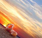 Beach conch. Couple of pretty seashells on beach with warm sunrise stock photography