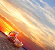 Beach conch. Couple of pretty seashells on beach with warm sunrise Stock Photography