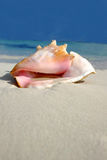 Beach Conch Series stock photography