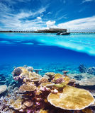 Beach with coral reef underwater view Royalty Free Stock Images