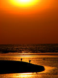 Beach Corner. Wild dogs reach on the end of an island at sunset in India Stock Photo