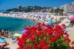 Beach on the Costa Brava Sant Antoni de Calonge of Spain.  stock photography