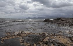 Beach covered with algae after storm. Algae cover the beach of son baulo in alcudia on the north side of the island of mallorca after some heavy summer storm Stock Image