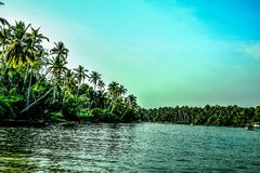 Beach Covered With Coconut Tree Lot Stock Images