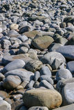 Beach covered with large grey smooth pebbles or stones. These rocks are a variety of shapes and can be used as background Royalty Free Stock Photos