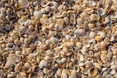 The beach is covered with multicolored shells of shellfish. Stock Photography