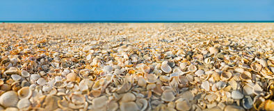 Beach covered with shells and sea on background. Panoramic view. Stock Photography