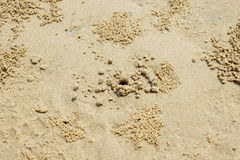 Beach crab hole Stock Images
