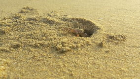 Beach crab royalty free stock photography