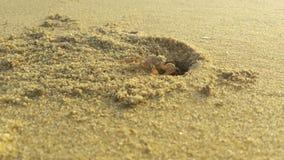 Beach crab royalty free stock photo