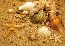 Beach Creatures Stock Image
