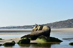 Beach with crested cormorant on a rock. Lake and blue sea with small waves, sunset light. Sunny day, Galicia, Spain. royalty free stock image