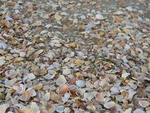 Beach of Crimea shells Stock Image