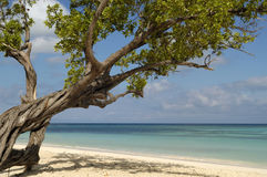 Beach in Cuba Stock Image