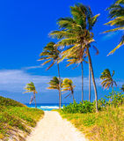 The beach in Cuba on a beautiful summer day. Coconut trees on the beautiful cuban beach of Varadero Stock Images