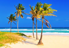The beach in Cuba on a beautiful summer day. The cuban beach of Varadero on a beautiful summer day Royalty Free Stock Image