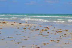 Beach in Cuba. Empty beach littered with seaweed in Cuba Royalty Free Stock Image