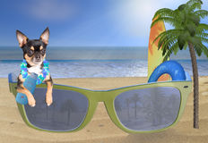 Beach with cute chihuahua dog looking in sunglasses and care for the sun. Background Stock Image