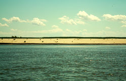 Beach and the Danube Stock Photography