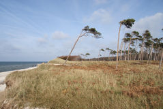 Beach of Darss - Weststrand Stock Photography