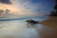 Beach, Dawn, Driftwood Stock Photos
