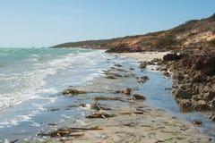 The beach at Denham, Shark Bay Stock Images