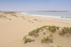 Beach and desert. Landscape of desert and sea in north chile Royalty Free Stock Image