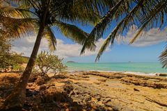Beach of Deshaies under the palm trees stock image