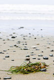 Beach detail on Pacific ocean coast of Canada Royalty Free Stock Photo