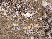Beach detail - sand, shells etc, shoreline Royalty Free Stock Photo