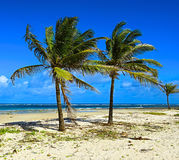 Beach Diani Stock Photography