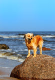 Beach dog Stock Photo