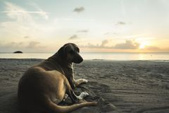 Beach dog and sunset behind royalty free stock photo