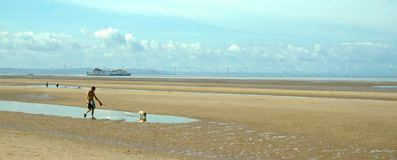 Beach dog walker. Man walking small dog in pool with reflection on Formby sands on a sunny day with a ferry and wind turbines in the distance Royalty Free Stock Photo