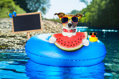 Beach dog with watermelon royalty free stock photography