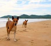 Beach Doggies Royalty Free Stock Photos