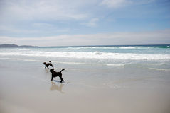 Beach & dogs Stock Photography