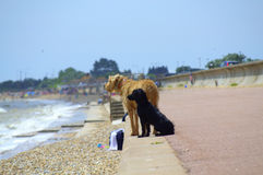 Beach dogs Kent United Kingdom. Two dogs standing at a seaside promenade looking to the sea at Dymchurch and St.Mary`s beach,Kent United Kingdom royalty free stock images